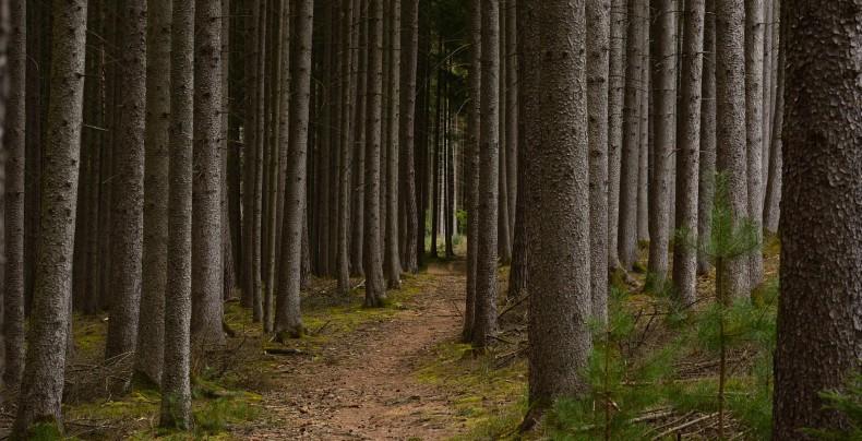 Forest_fibers