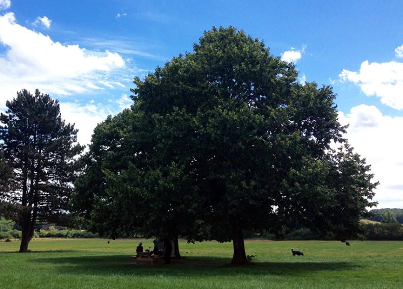 BM_tree